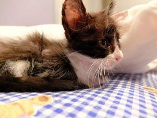 負傷したネコの写真