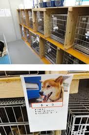 災害時の動物救護活動業務